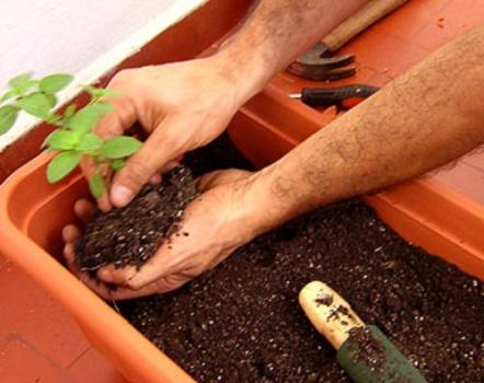 459735 Tipos de adubos para plantas 2 Tipos de adubos para plantas