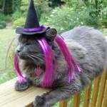 459946 Fotos de gatos fantasiados 05 150x150 Fotos de gatos fantasiados