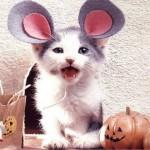 459946 Fotos de gatos fantasiados 08 150x150 Fotos de gatos fantasiados