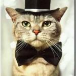 459946 Fotos de gatos fantasiados 09 150x150 Fotos de gatos fantasiados