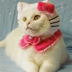 459946 Fotos de gatos fantasiados 10 150x150 Fotos de gatos fantasiados
