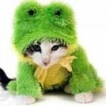 459946 Fotos de gatos fantasiados 15 150x150 Fotos de gatos fantasiados