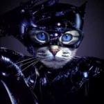 459946 Fotos de gatos fantasiados 19 150x150 Fotos de gatos fantasiados