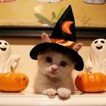 459946 Fotos de gatos fantasiados 20 150x150 Fotos de gatos fantasiados