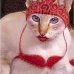 459946 Fotos de gatos fantasiados 22 150x150 Fotos de gatos fantasiados