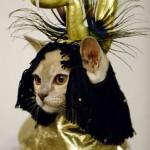 459946 Fotos de gatos fantasiados 25 150x150 Fotos de gatos fantasiados