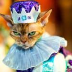 459946 Fotos de gatos fantasiados 26 150x150 Fotos de gatos fantasiados