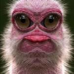 460162 Fotos de animais engraçados 05 150x150 Fotos de animais engraçados