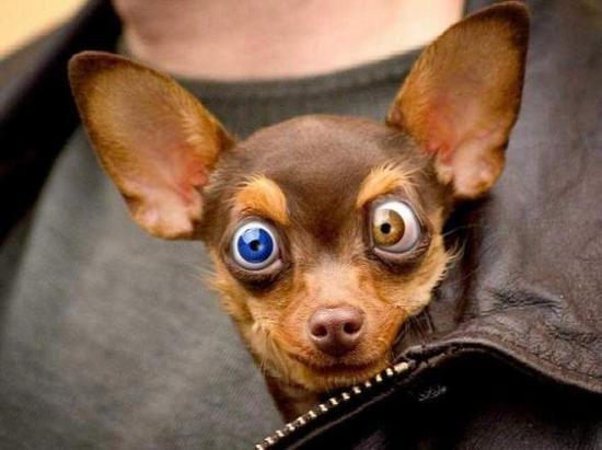 460162 Fotos de animais engra%C3%A7ados 08 Fotos de animais engraçados