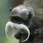 460162 Fotos de animais engraçados 13 150x150 Fotos de animais engraçados