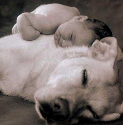 461289 Fotos de beb%C3%AAs com cachorros 02 Fotos de bebês com cachorros