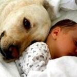 461289 Fotos de bebês com cachorros 03 150x150 Fotos de bebês com cachorros