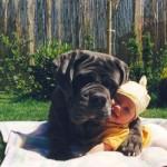 461289 Fotos de bebês com cachorros 05 150x150 Fotos de bebês com cachorros
