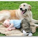 461289 Fotos de bebês com cachorros 10 150x150 Fotos de bebês com cachorros