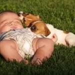 461289 Fotos de bebês com cachorros 11 150x150 Fotos de bebês com cachorros