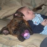 461289 Fotos de bebês com cachorros 16 150x150 Fotos de bebês com cachorros