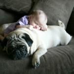 461289 Fotos de bebês com cachorros 20 150x150 Fotos de bebês com cachorros