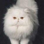 461494 Fotos de filhotes de gato bonitos 02 150x150 Fotos de filhotes de gato bonitos
