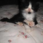 461494 Fotos de filhotes de gato bonitos 03 150x150 Fotos de filhotes de gato bonitos