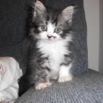461494 Fotos de filhotes de gato bonitos 05 150x150 Fotos de filhotes de gato bonitos