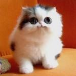 461494 Fotos de filhotes de gato bonitos 07 150x150 Fotos de filhotes de gato bonitos