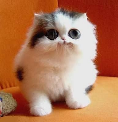 461494 Fotos de filhotes de gato bonitos 07 Fotos de filhotes de gato bonitos