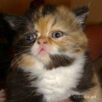 461494 Fotos de filhotes de gato bonitos 09 150x150 Fotos de filhotes de gato bonitos