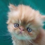 461494 Fotos de filhotes de gato bonitos 11 150x150 Fotos de filhotes de gato bonitos