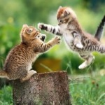 461494 Fotos de filhotes de gato bonitos 21 150x150 Fotos de filhotes de gato bonitos