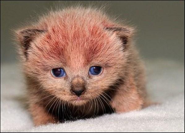 461494 Fotos de filhotes de gato bonitos 22 Fotos de filhotes de gato bonitos