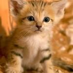 461494 Fotos de filhotes de gato bonitos 25 150x150 Fotos de filhotes de gato bonitos