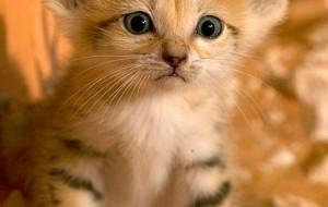 Fotos de filhotes de gato bonitos