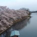465551 Fotos do Japão 09 150x150 Fotos do Japão