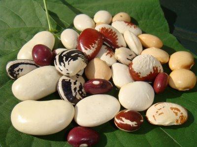 465746 feijão fava variados Qual tipo de feijão é mais saudável?