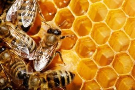 468793 Benefícios do mel para e pele quais são.2 Benefícios do mel para a pele: quais são