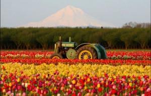 Fotos da Holanda, país das tulipas 18