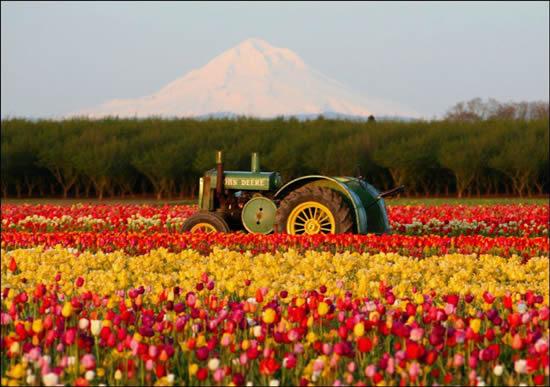 470111 Fotos da Holanda pa%C3%ADs das tulipas 20 Fotos da Holanda, país das tulipas