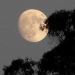 471717 Imagens bonitas da Lua 11 150x150 Imagens bonitas da Lua