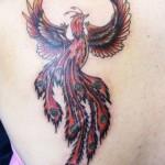 474204 Tatuagem de fênix fotos 005 150x150 Tatuagem de fênix: fotos