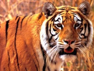 477469 animais que estao em risco de extincao 1 Animais que estão em risco de extinção