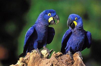 477469 animais que estao em risco de extincao 2 Animais que estão em risco de extinção