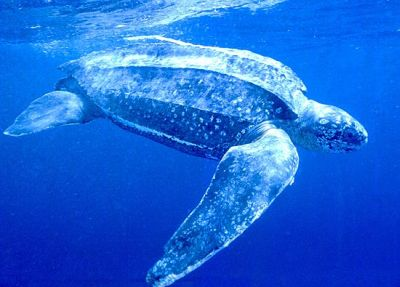 477469 animais que estao em risco de extincao 3 Animais que estão em risco de extinção