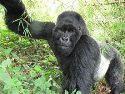 477469 animais que estao em risco de extincao 4 Animais que estão em risco de extinção