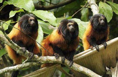 477469 animais que estao em risco de extincao 5 Animais que estão em risco de extinção
