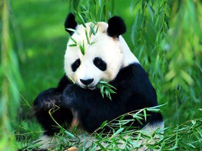 477469 animais que estao em risco de extincao 6 Animais que estão em risco de extinção