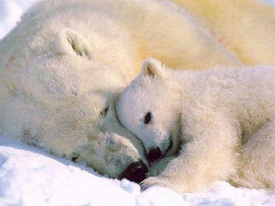 477469 animais que estao em risco de extincao 7 Animais que estão em risco de extinção
