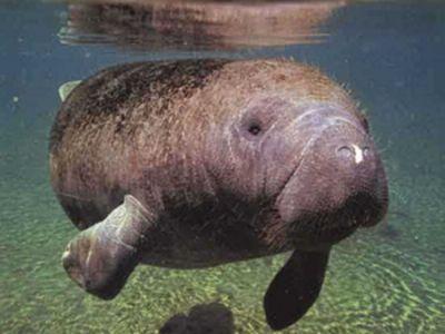 477469 animais que estao em risco de extincao 8 Animais que estão em risco de extinção