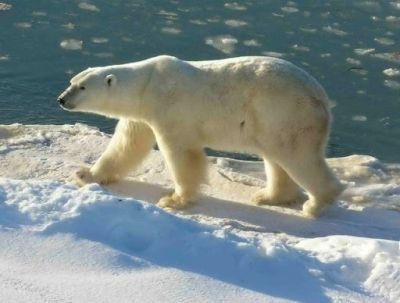 477469 animais que estao em risco de extincao Animais que estão em risco de extinção