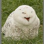 479254 Fotos engraçadas de corujas 17 150x150 Fotos engraçadas de corujas