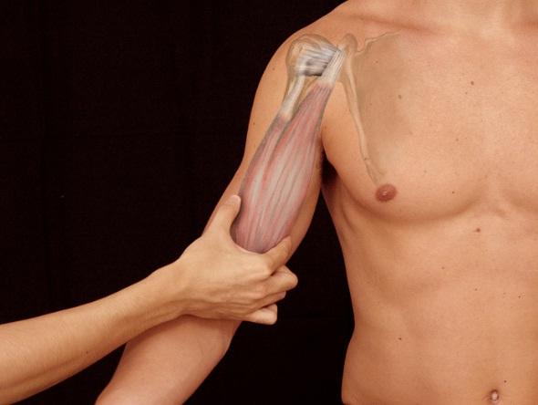 480310 As proteses masculinas são indicadas para quem possui dificuldade no desenvolvimento da musculatura em academias 2 Lugares onde os homens colocam silicone